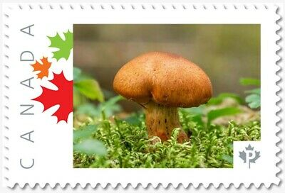 MUSHROOM = BROWN = Picture Postage MNH-VF Canada 2019 [p19-02sn19]