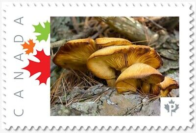 MUSHROOMS = Picture Postage stamp MNH-VF Canada 2019 [p19-02sn18]