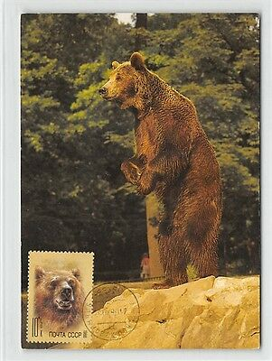 Wild Animals Topical Stamps Fashion Style Russia Mk 1988 Fauna BÄr Bear Urs Maximumkarte Carte Maximum Card Mc Cm D9898