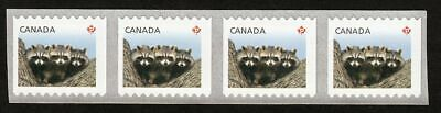 ma. BABY RACCOONS Strip of 4 from LARGE COIL of 5000 Canada 2012 #2505