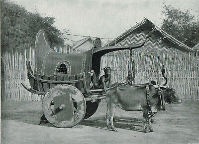 Burmese Carriage And Pair Burma Myanmar 1897 Antique Print Picture TQE#46