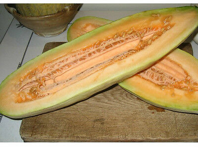 Melon Muskmelon BANANA 100 SEEDS Heirloom Fragrant Juicy Sweet LARGE Fruits