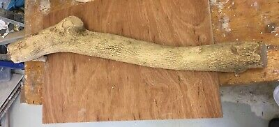 Huge Piece of Boxwood - Toolmaking Turning Sculpting Sculpture Modelling Tools