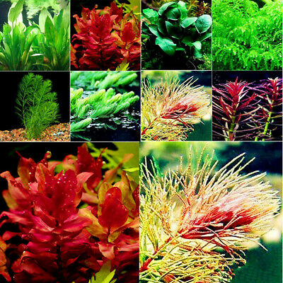 100pcs/Pack Aquarium Plant Mix Seeds Water Grasses Random Aquatic Plant Grass