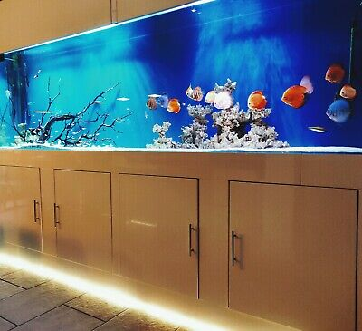 Bespoke Aquarium Design & Installation Service Fish Tank