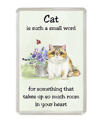 Red Tabby Maine Coon /'Cat is such a small word/' Fridge Magnet Fun Novelty Gift