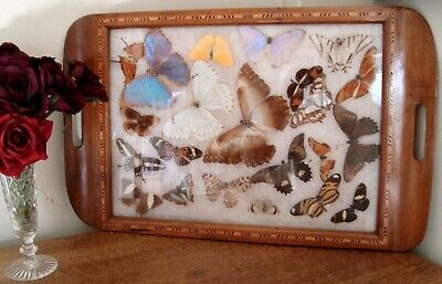 VINTAGE Wooden Inlaid Serving Tray Butterfly Display under Glass
