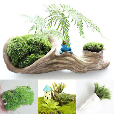 Natural Green Moss Live Plants For Micro Landscape Home Garden Decoration