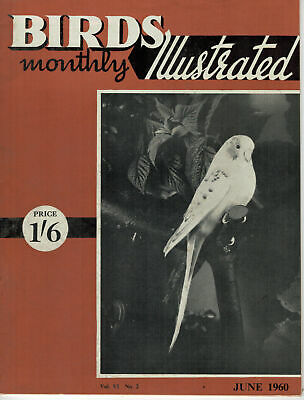 Birds Illustrated Monthly Magazine 1960 June Teal Cuckoo 2668F