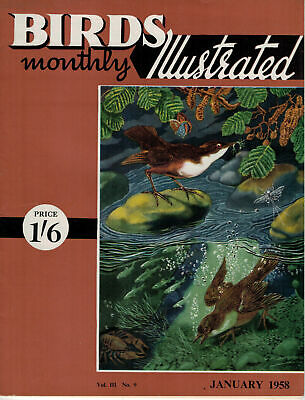 Birds Illustrated Monthly Magazine 1958 January Grey Wagtail Woodpecker 2641F