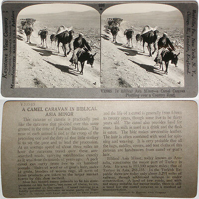 Keystone Stereoview of a Large Camel Caravan in TURKEY From RARE 1200 Card Set