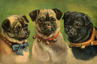 Pug Dogs 2 Fawn, 1 Black by J. Blowet 1924 - LARGE New Blank Note Cards