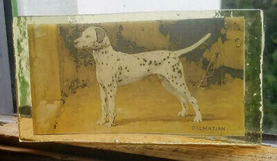 Stained Glass Dalmation dog - Kiln fired fragment  pane!