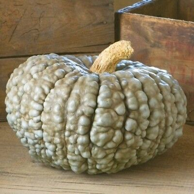 Pumpkin Marina di Chioggia Vegetable Plant Seeds Outdoor Patio EU Standard