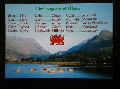 Postcard B45-5 The Language Of Wales (1)