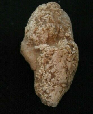 Corprolite with Digested Dinosaur Tooth collected by Cha in Glen Rose, Texas