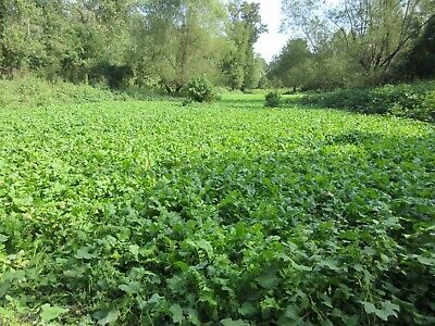 5 Lbs NO TILL DEER FOOD PLOT SEED MIX Throw & Grow Clovers Brassicas Chicory