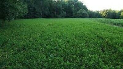 6 Lbs EXCLUSIVE DEER FOOD PLOT Seed Mix Ladino Clover/Chicory Year Round Forage