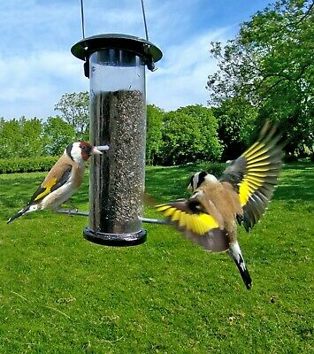 400g Niger Seed Wild Bird Food Feed Goldfinches Lesser Redpol finch Next Day De