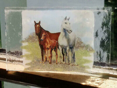 Stained Glass 3 Horses -  Kiln fired fragment vintage pane!