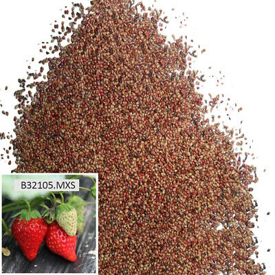 100 Pcs/Bag Rare Red Strawberry Seeds Garden Fruit Plant Sweet And Delicious New