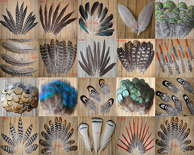 Wholesale all kinds of different beautiful natural pheasant feather