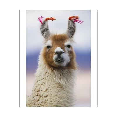 "10""x8"" (25x20cm) Print of Llama, Bolivia from"