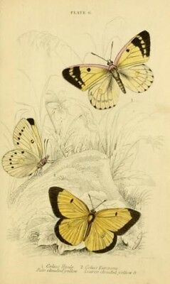 Butterfly & Moths books converted from old books into Kindle Epub & Pdf format