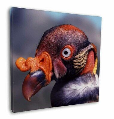 """King Vulture Bird of Prey 12""""x12"""" Wall Art Canvas Decor, Picture Prin, AB-66-C12"""