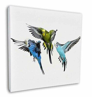 """Budgerigars, Budgies in Flight 12""""x12"""" Wall Art Canvas Decor, Picture, AB-94-C12"""