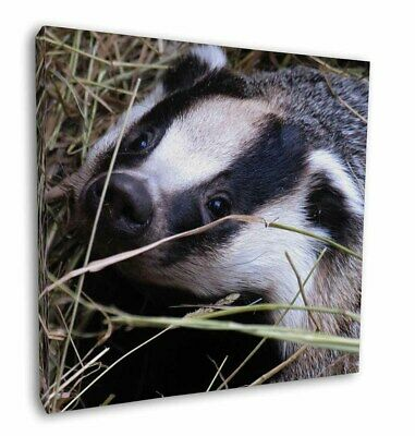 """Badger in Straw 12""""x12"""" Wall Art Canvas Decor, Picture Print, ABA-1-C12"""