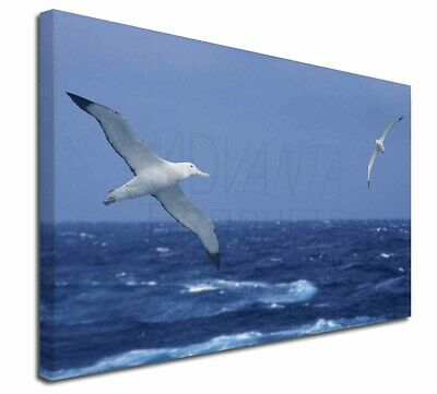 "Sea Albatross Flying Free 30""x20"" Wall Art Canvas, Extra Large Pic, AB-106-C3020"