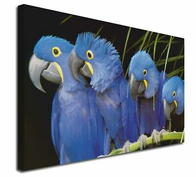 """Hyacinth Macaw Parrots 30""""x20"""" Wall Art Canvas, Extra Large Pictur, AB-PA1-C3020"""