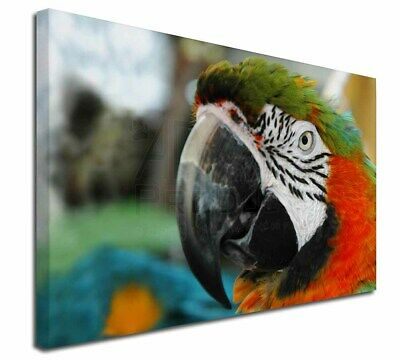 """Face of a Macaw Parrot 30""""x20"""" Wall Art Canvas, Extra Large Pictu, AB-PA75-C3020"""