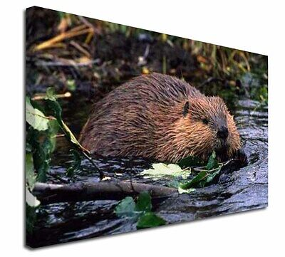 """River Beaver 30""""x20"""" Wall Art Canvas, Extra Large Picture Print Dec, ABV-1-C3020"""