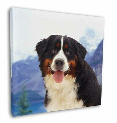 "Bernese Mountain Dog 12""x12"" Wall Art Canvas Decor, Picture Print, AD-BER6-C12"