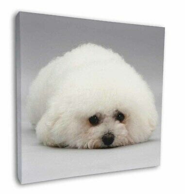 "Bichon Frise Dog 12""x12"" Wall Art Canvas Decor, Picture Print, AD-BF1-C12"