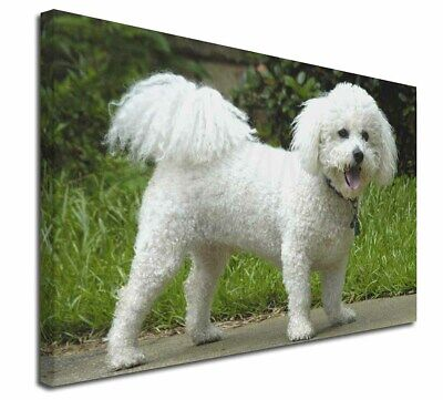 "Bichon Frise Dog 30""x20"" Wall Art Canvas, Extra Large Picture Prin, AD-BF2-C3020"