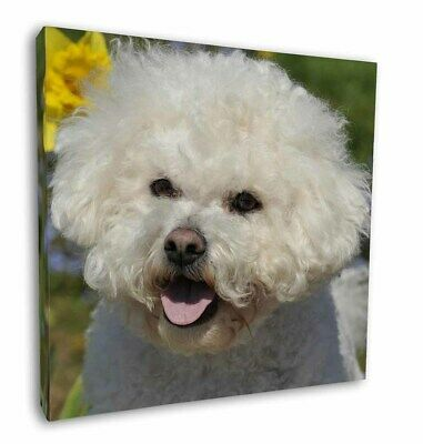 "Bichon Frise Dog 12""x12"" Wall Art Canvas Decor, Picture Print, AD-BF6-C12"