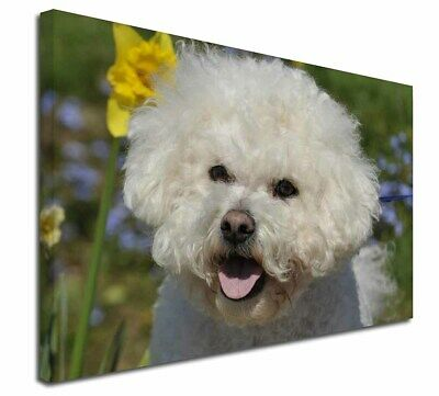 "Bichon Frise Dog 30""x20"" Wall Art Canvas, Extra Large Picture Prin, AD-BF6-C3020"
