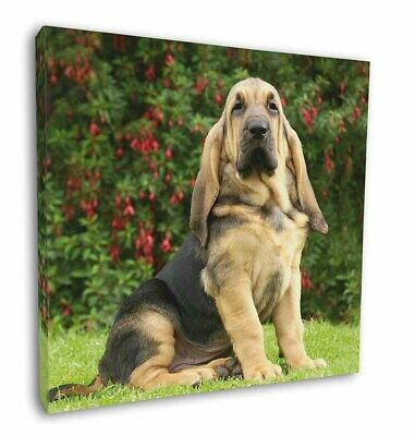 """Bloodhound Dog 12""""x12"""" Wall Art Canvas Decor, Picture Print, AD-BL1-C12"""