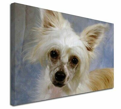 "Chinese Crested Powder Puff Dog 30""x20"" Wall Art Canvas, Extra La, AD-CHC3-C3020"