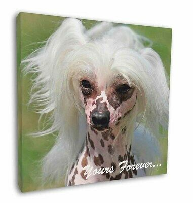 "Chinese Crested Dog ""Yours Forever..."" 12""x12"" Wall Art Canvas Dec, AD-CHC4y-C12"