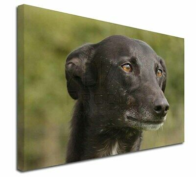 "Greyhound Dog 30""x20"" Wall Art Canvas, Extra Large Picture Print D, AD-GH2-C3020"