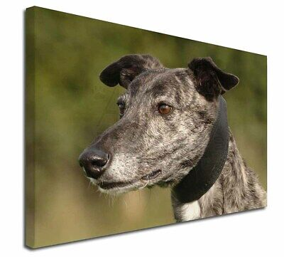 "Greyhound Dog 30""x20"" Wall Art Canvas, Extra Large Picture Print D, AD-GH3-C3020"