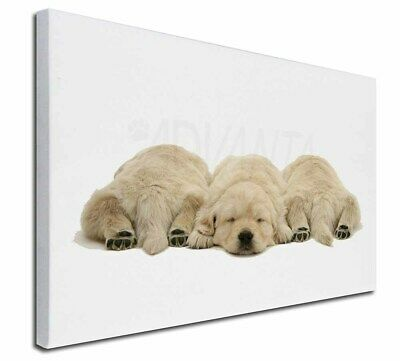 """Golden Retriever Puppies 30""""x20"""" Wall Art Canvas, Extra Large Pict, AD-GR3-C3020"""