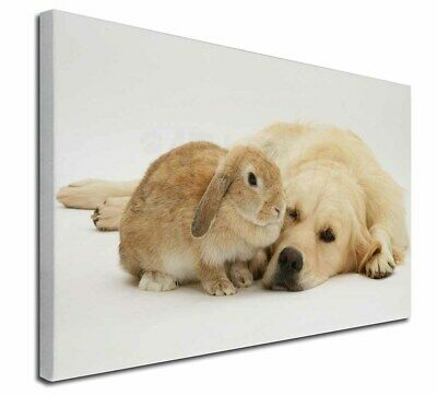 """Golden Retriever and Rabbit 30""""x20"""" Wall Art Canvas, Extra Large , AD-GR52-C3020"""