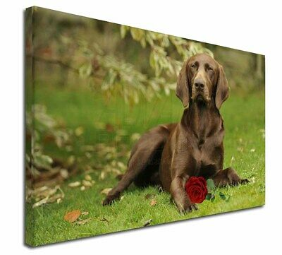 "German Shorthaired Pointer with Red Rose 30""x20"" Wall Art Canvas, AD-GSP1R-C3020"