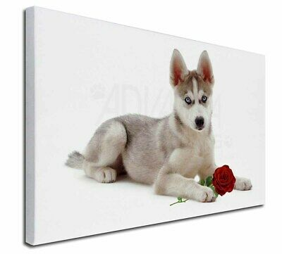 """Siberian Husky with Red Rose 30""""x20"""" Wall Art Canvas, Extra Large, AD-H54R-C3020"""