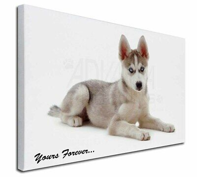 """Husky 'Yours Forever' 30""""x20"""" Wall Art Canvas, Extra Large Pictur, AD-H54y-C3020"""